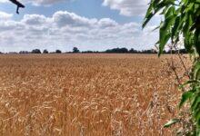 О налогообложение крестьянских и фермерских хозяйств